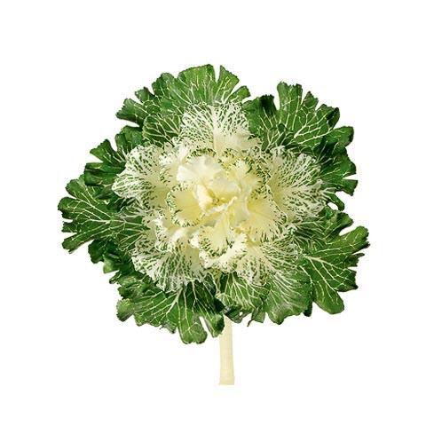 11 Inch Japanese Silk Cabbage Spray White