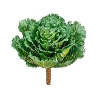 14 Inch Silk Cabbage Spray Green Cream