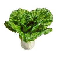 7 Inch Silk Cabbage Green