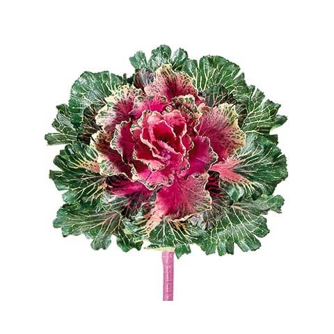 11 Inch Japanese Silk Cabbage Spray