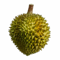 6 Inch x 7.5 Inch Artificial Durian