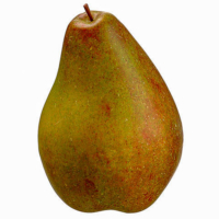 8 Inch Artificial Pear