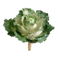11.5 Inch Ornamental Faux Cabbage Cream Green