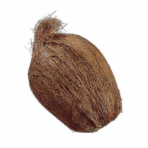 7 Inch Weighted Fake Coconut