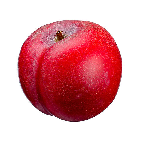 2 Inch Weighted Artificial Plum Red