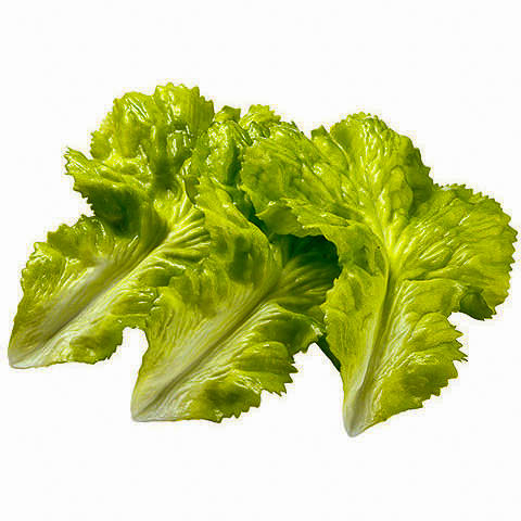 7 Inch Artificial Lettuce (3 Per/Bag)